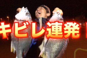 夜の焼津港でキビレが連発!